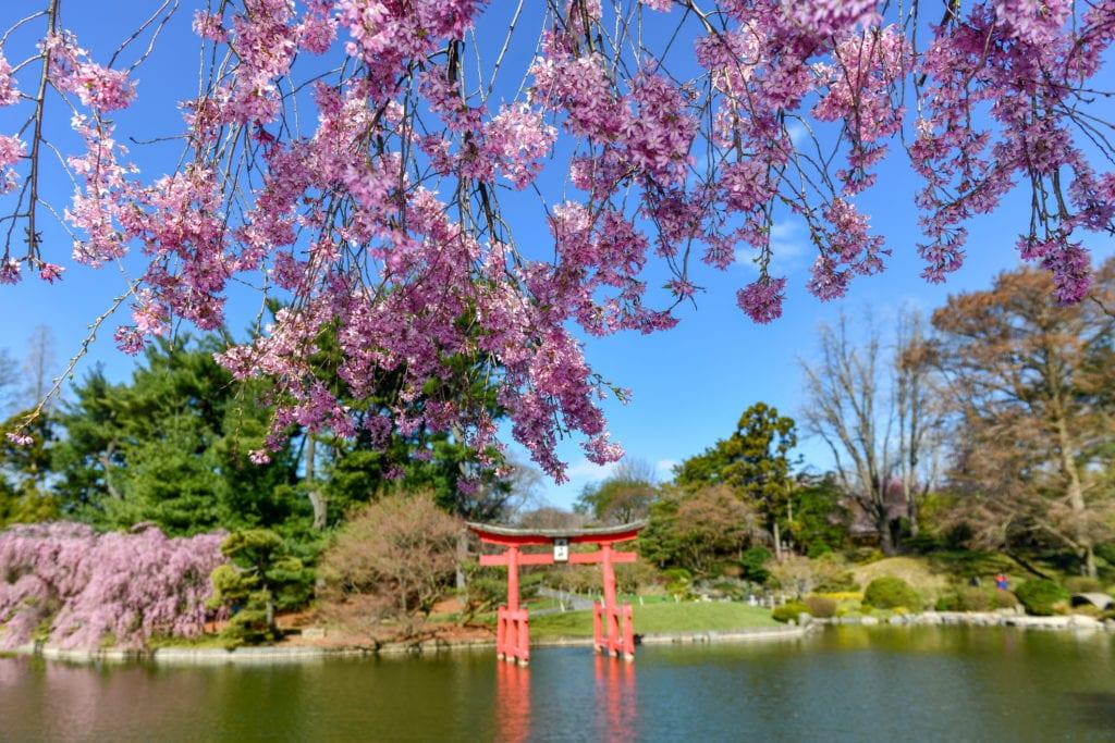 Ogród japoński w ogród botaniczny, Brooklyn, Nowy Jork