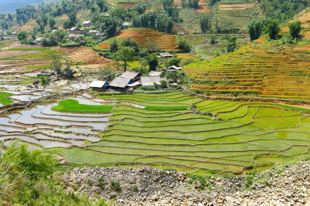 Pola ryżowe w okolicach Sapa, Wietnam