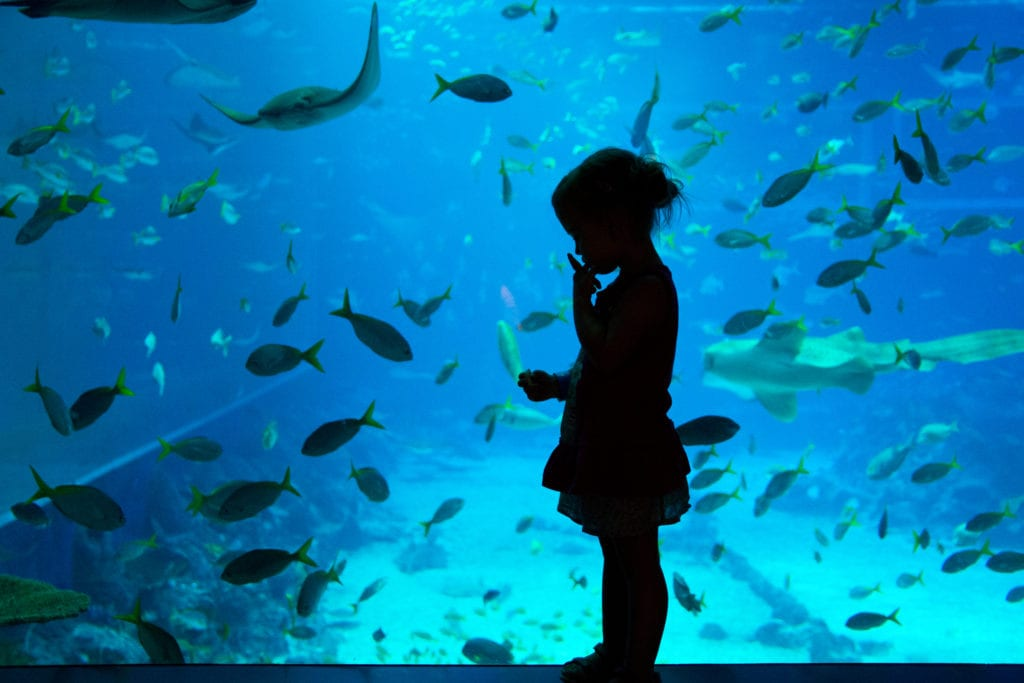 Akwarium na wyspie Sentosa, Singapur