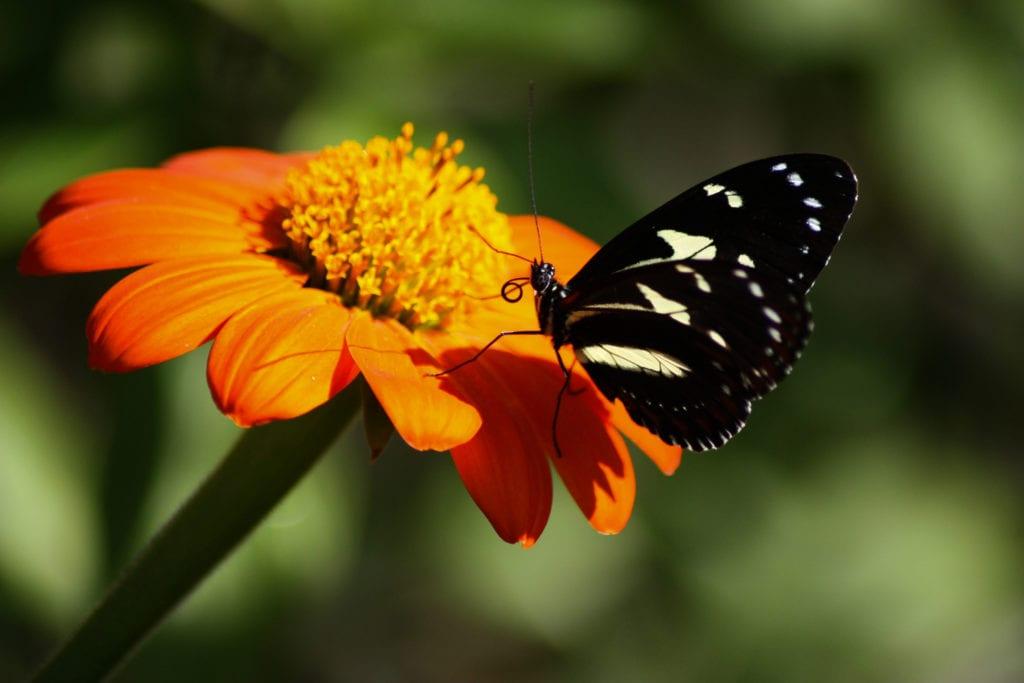 Butterfly World w Fort Lauderdale, Floryda