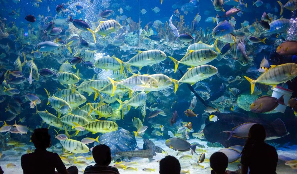 Oceanarium w Kuala Lumpur, Malezja