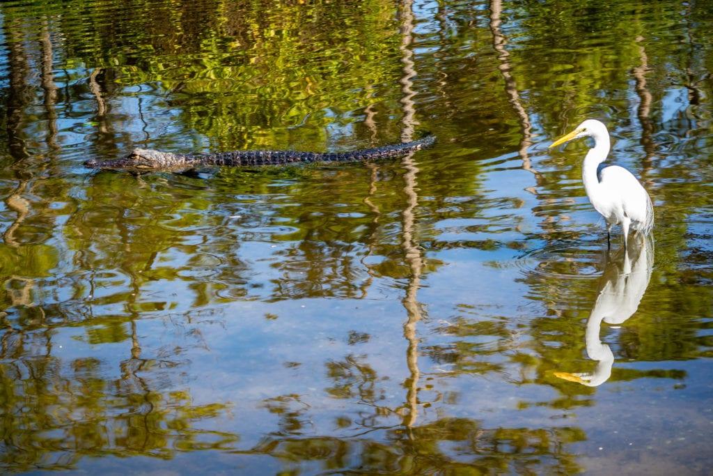 Park Gatorland, Orlando Floryda