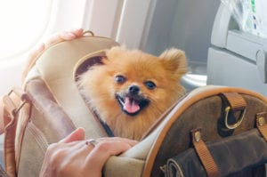 Podróż samolotem z psem lub kotem