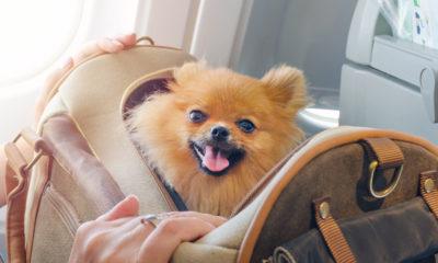 Podróż ze zwierzęciem samolotem,