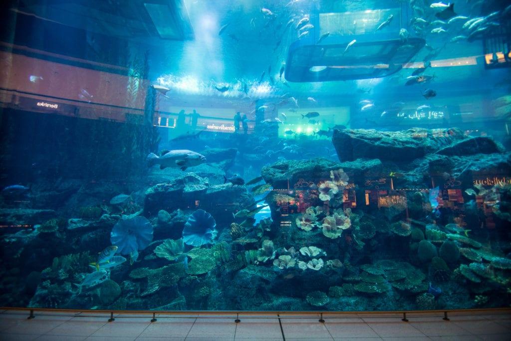 W Dubai Mall znajduje się m.in. akwarium, Dubaj
