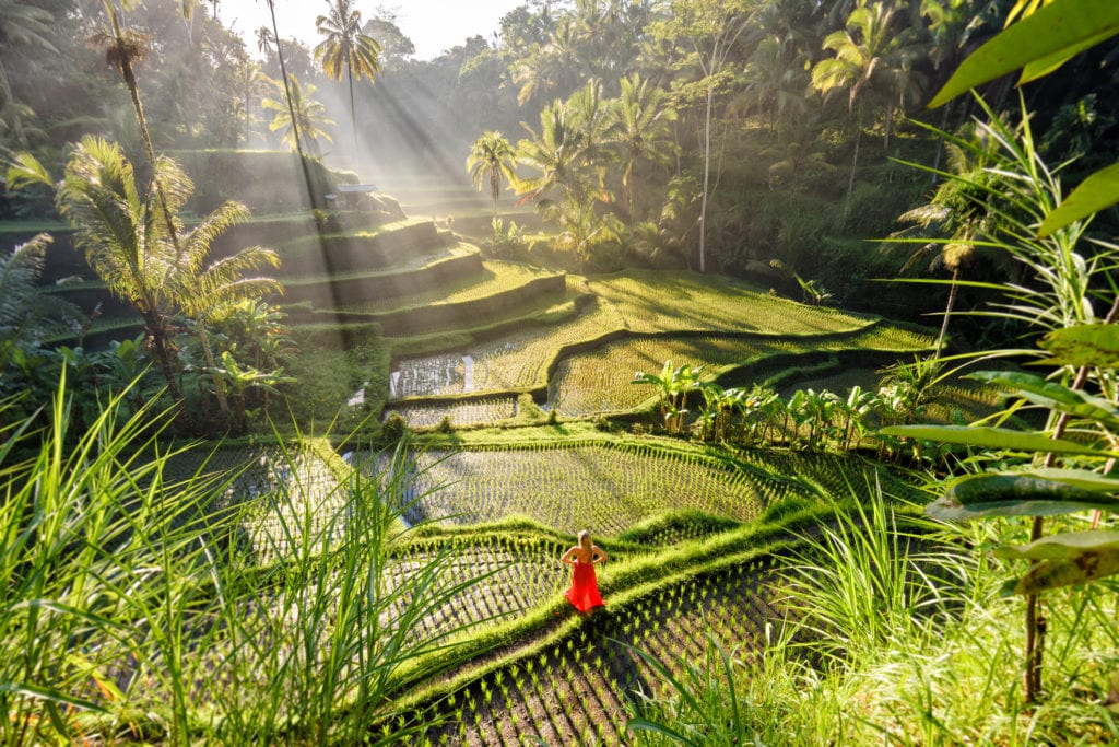Pola ryżowe w Tegalalang, Bali Indonezja