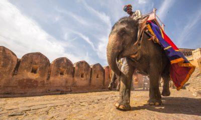 Fort Amber w Jaipur, India