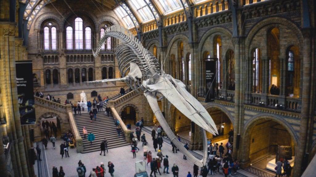 Muzeum Historii Naturalnej to jedna z głównych atrakcji w Londynie, bezpłatne wejście