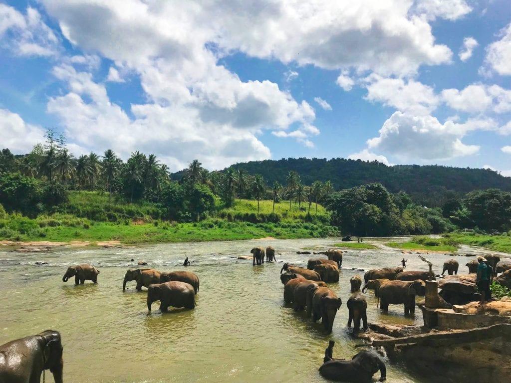 Słonie można zobaczyć również podczas safari w Parku Narodowym Wilpattu, Sri Lanka