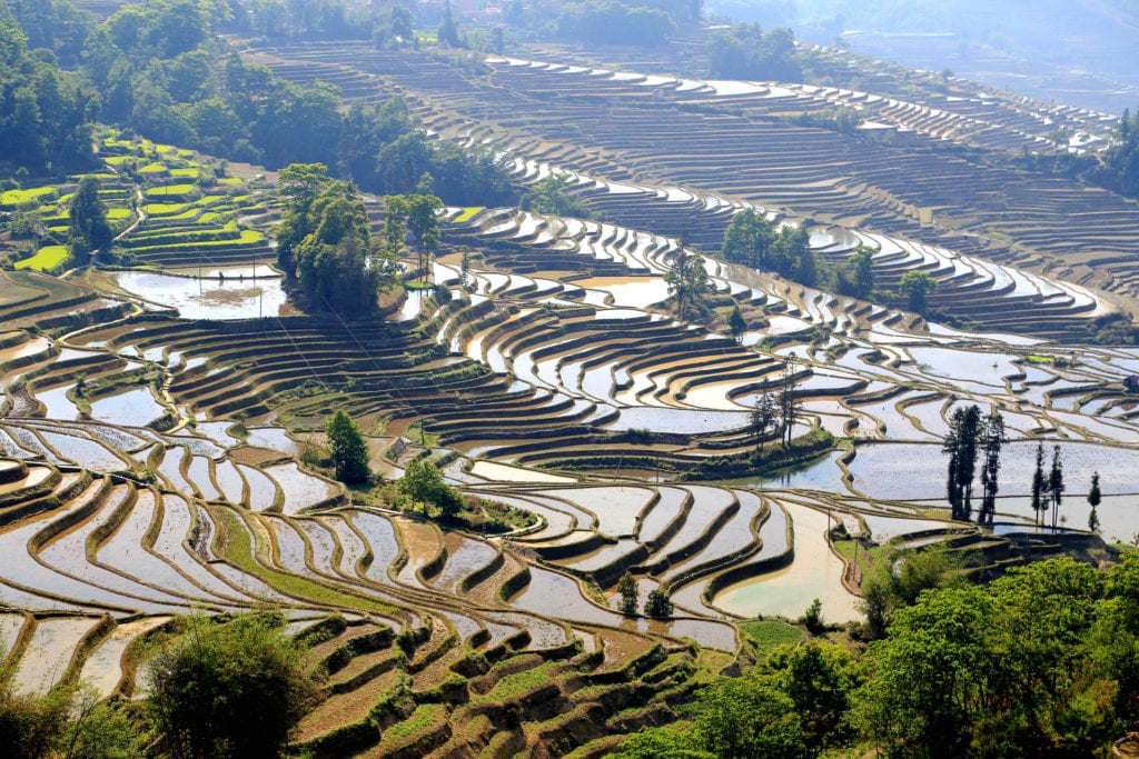 Tarasy ryżowe w Yuanyang Chiny