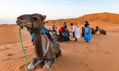 Wycieczka na wielbłądach po pustyni Erg Chebbi, Maroko