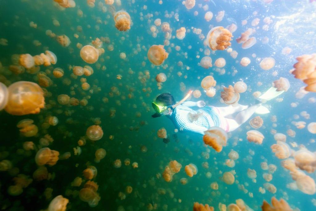 ze względu na ochronę środkowiska pływanie w jeziorze Jellyfish lake jest zakazane/kontrolowane