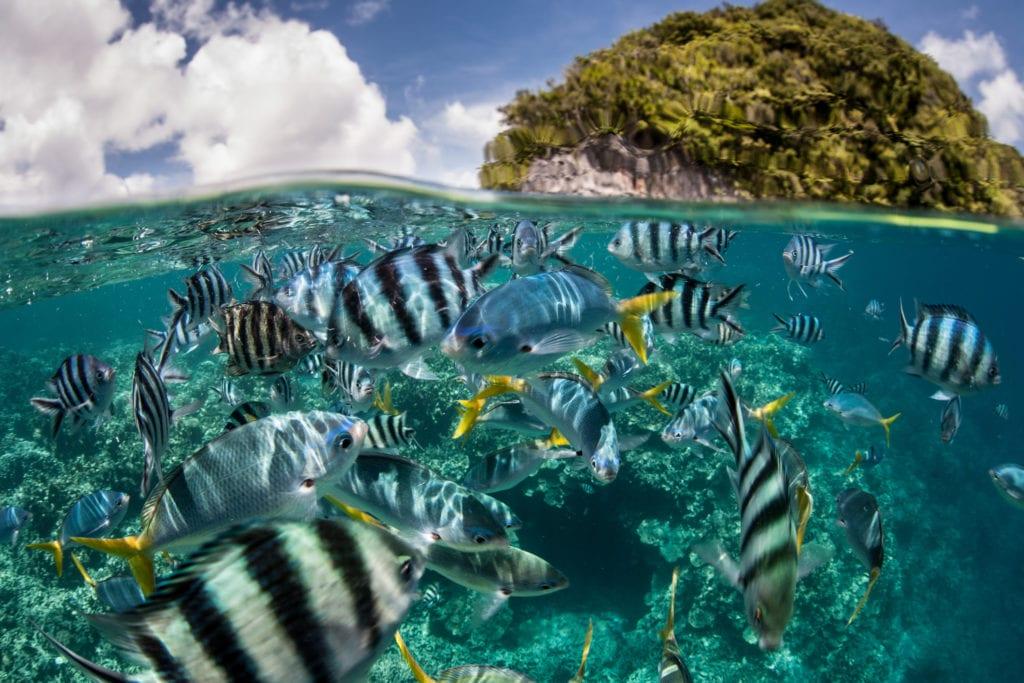 Bogactwo podwodnego świata na Palau,