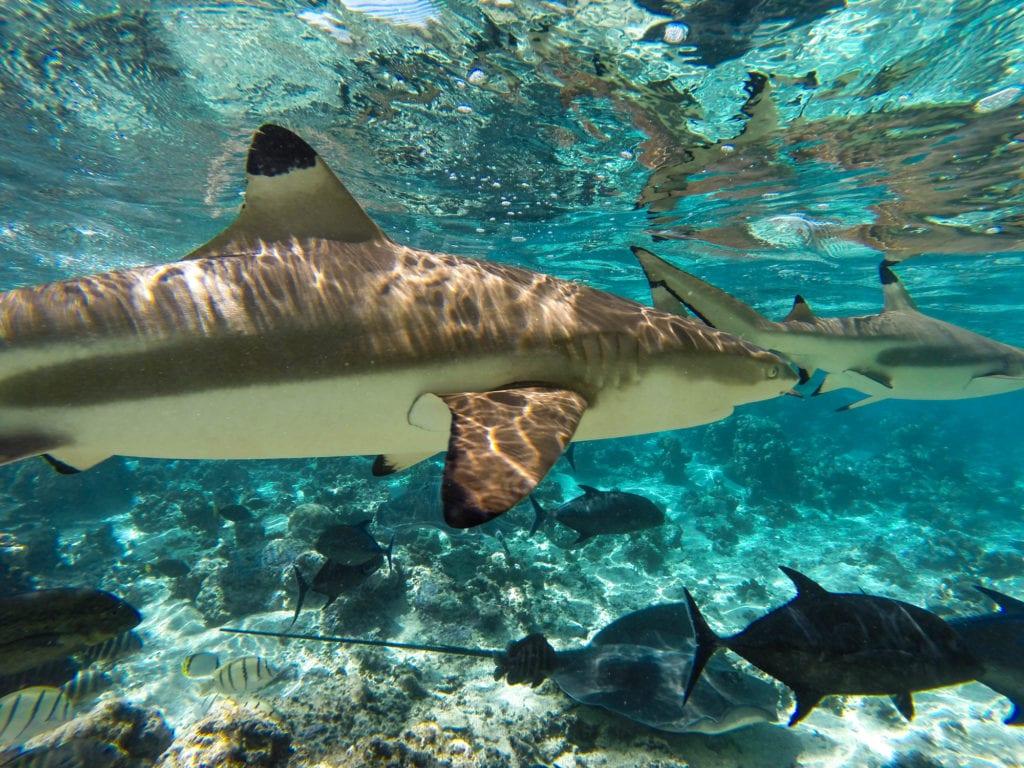 Pływanie na Tahiti i Moorea,