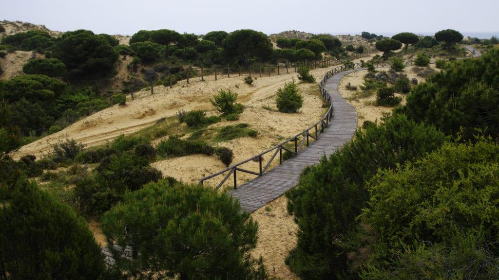 Park Narodowy Doñana w Matalascanas, niedaleko Huelva, Andaluzja