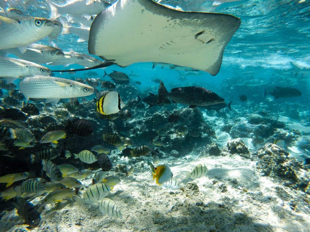 Podwony świat na Tahiti, Polinezja Francuska