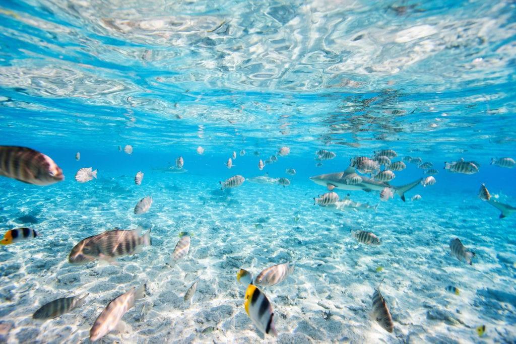 Polinezja Francuska to raj dla miłośników nurkowania i snorkelingu,