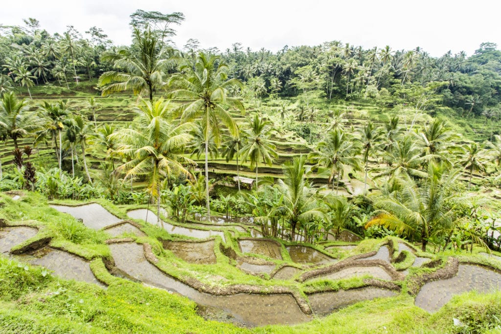 Tegalalang, pola ryżowe na Bali, Indonezja