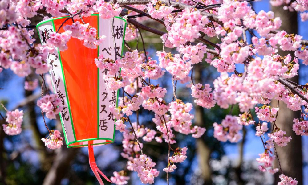 Tokio wiosną, kwitnące wiśnie, Japonia