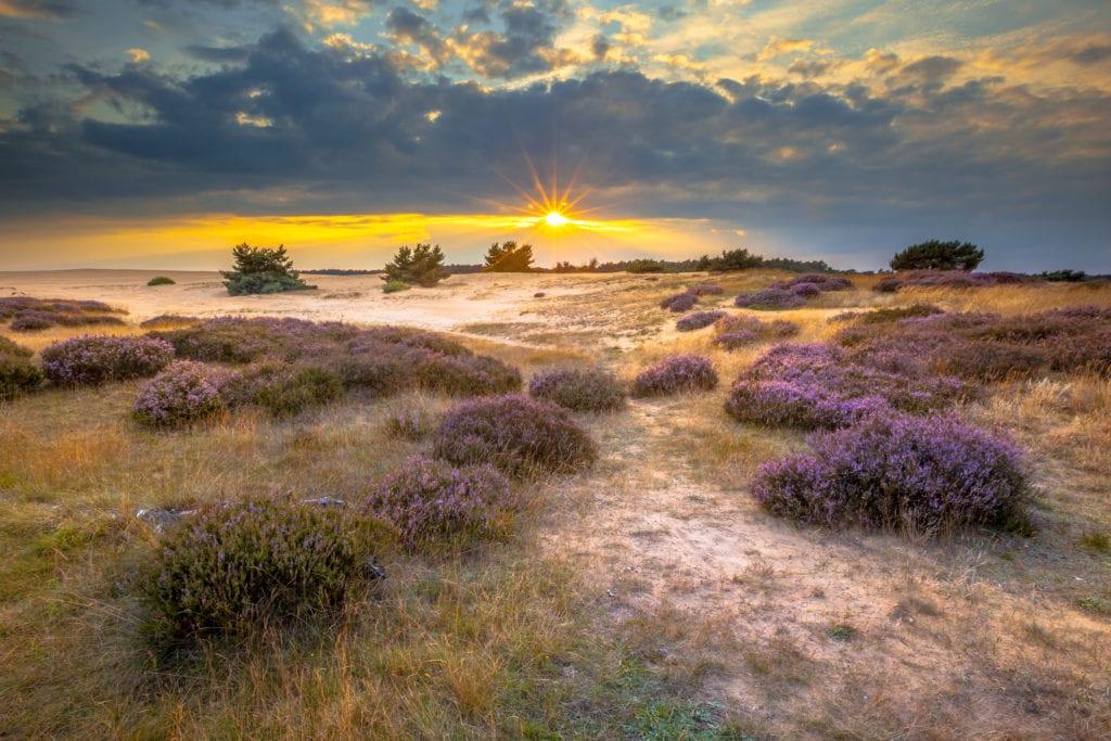 Krajobraz Parku Narodowego De Hoge Veluwe, Holandia