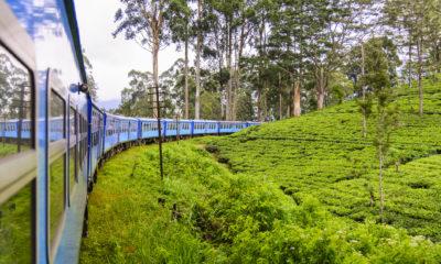 Podczas podróży z okien pociągu widać pola herbaty, Sri Lanka