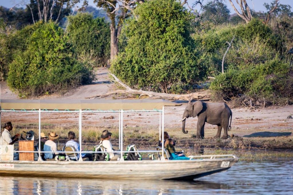 Słoń w Parku Narodowym Chobe, Botswana