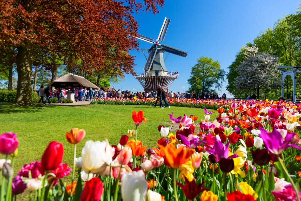 Tulipany w Lisse, Holandia