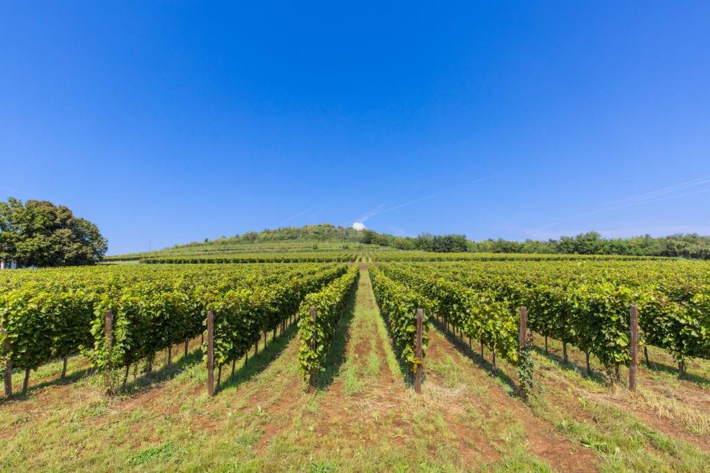 Życie w regionie Tokaj związane jest z winogronem i winem, Węgry