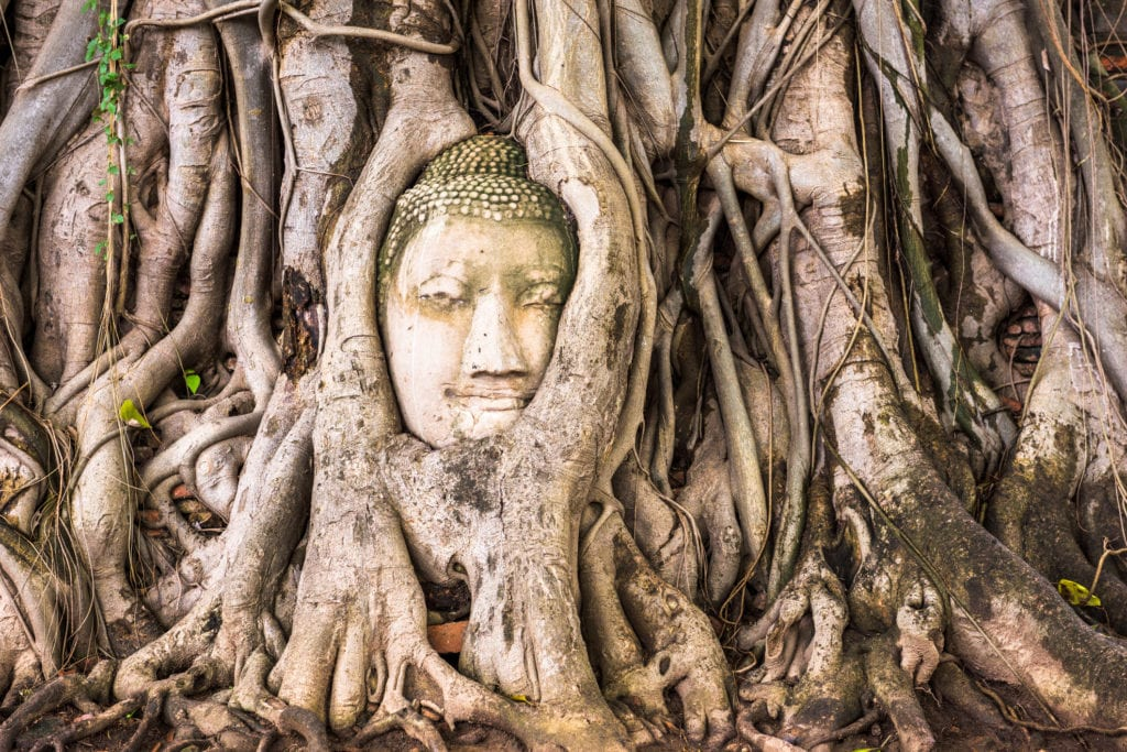 Głowa Buddy w świątyni Wat Phra Mahathat Ayutthaya Tajlandia