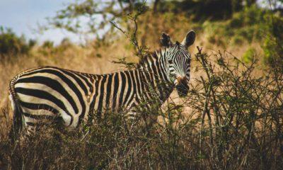 Park Narodowy Nairobi, Kenia