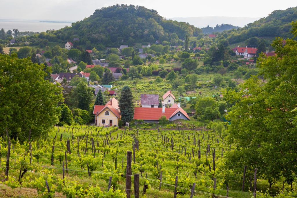 Winnice w okolicach Balatonu, Węgry