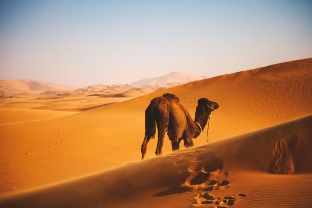 Wyprawa na Saharę,