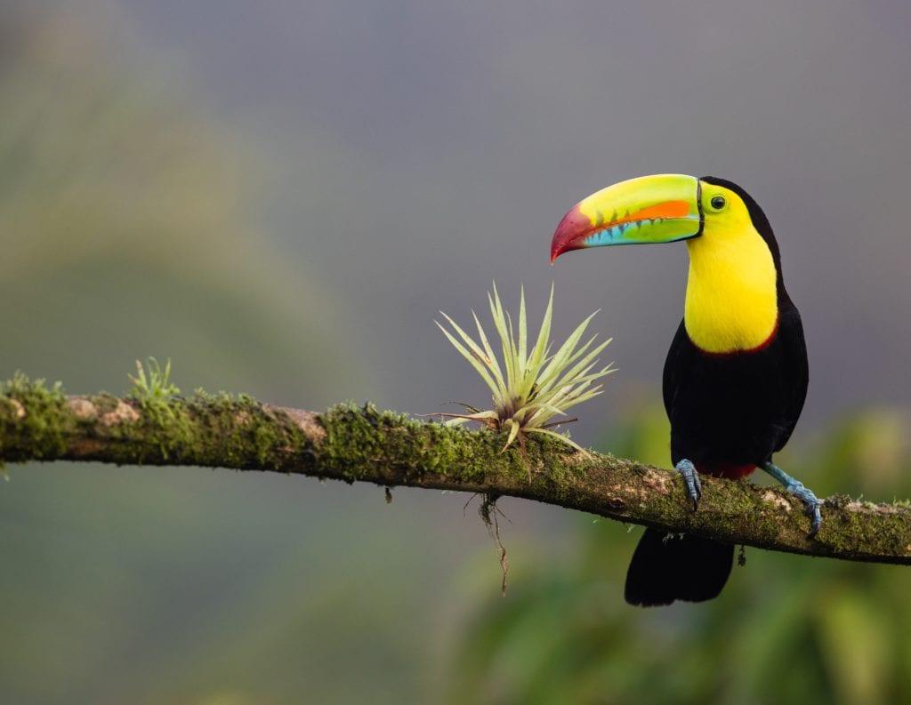 tukan kostaryka