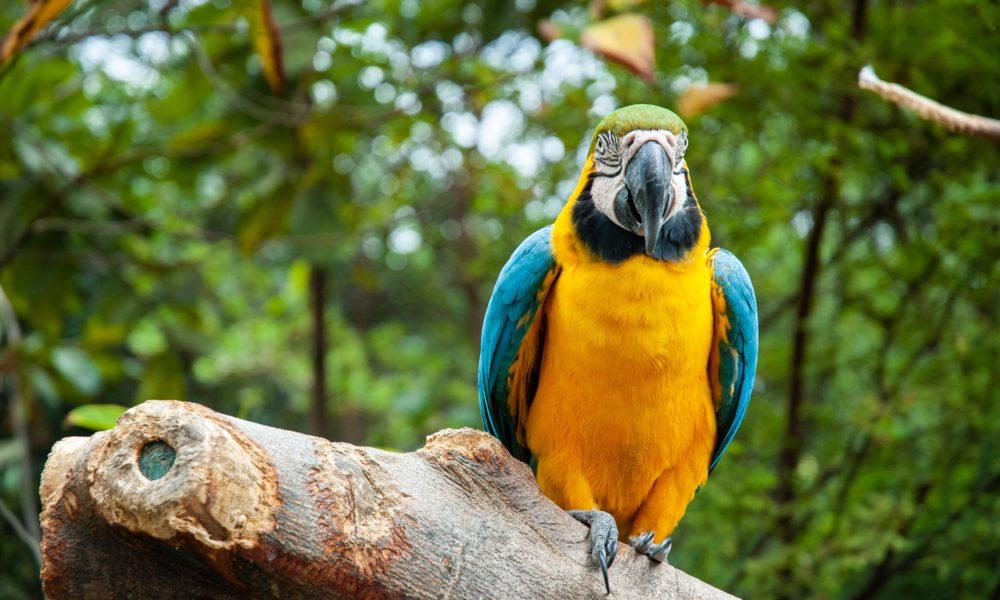 Lasy pokrywają 50% powierzchni Ekwadoru,