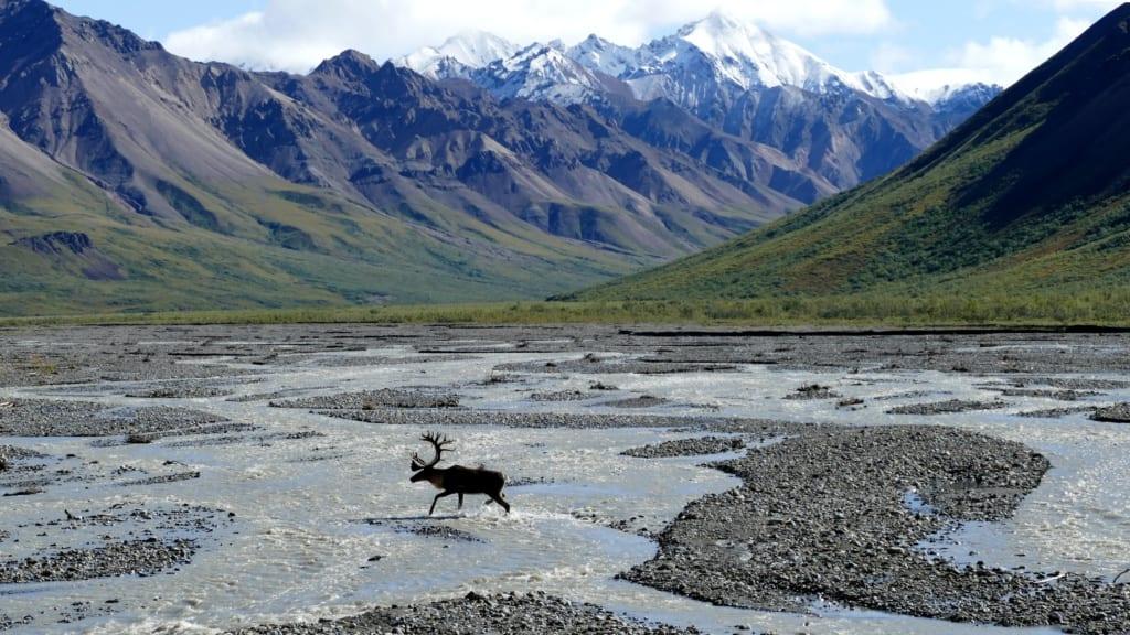 Park Narodowy Denali, Alaska