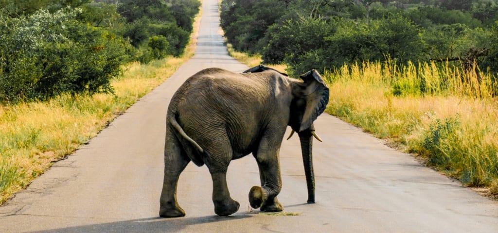 Park Narodowy Kruger,