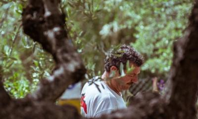 Gaje oliwne w Grecji